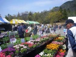 春の園芸祭り20170422-3