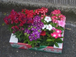 春の園芸祭り20170422-6