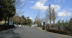 鏡山公園~散歩20170307-5