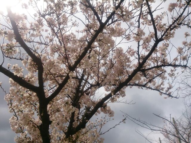 17 桜甲東園11