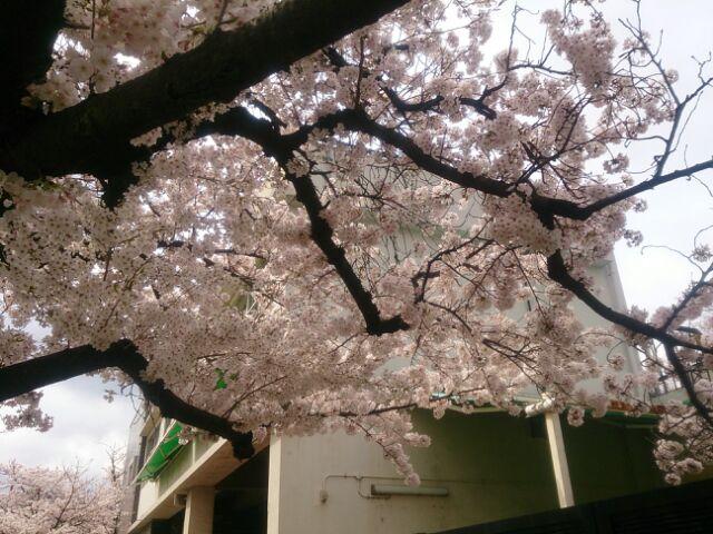 17 桜甲東園9