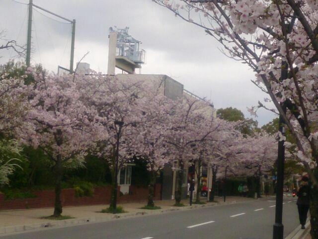 17 桜甲東園2
