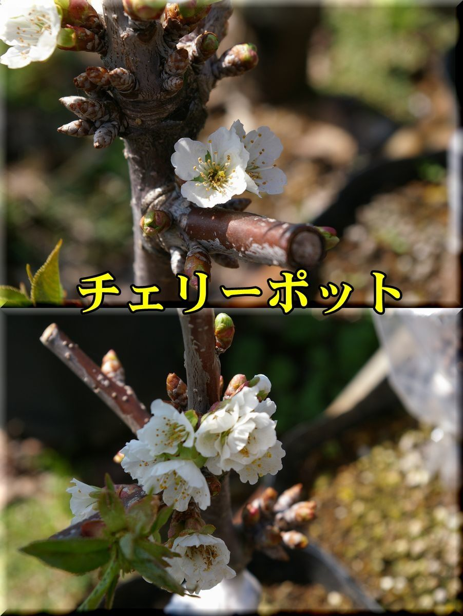 1CP170307_015.jpg