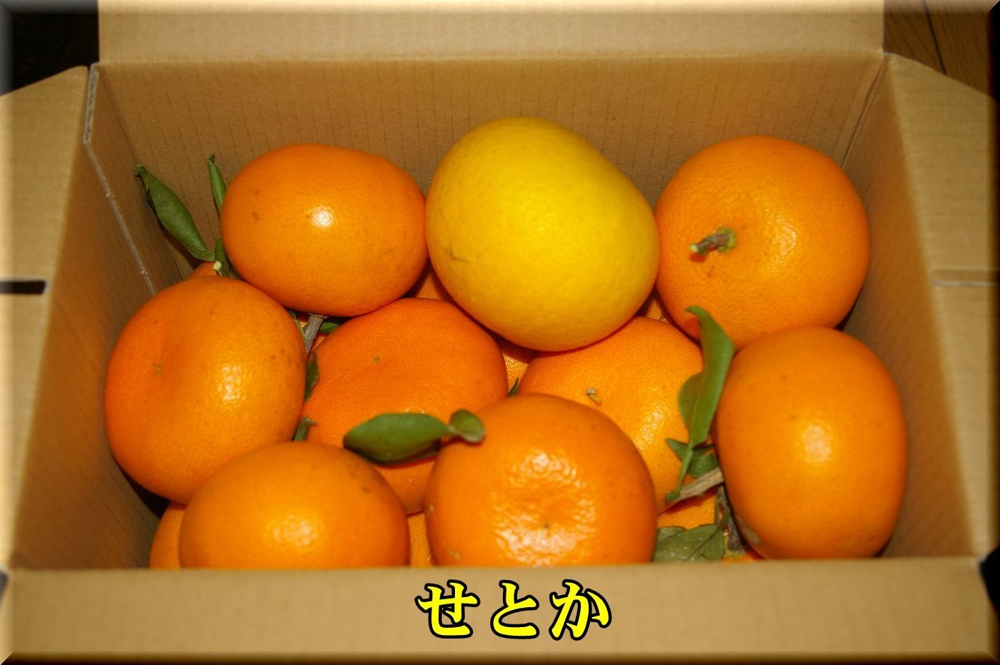 1DC170222_002.jpg