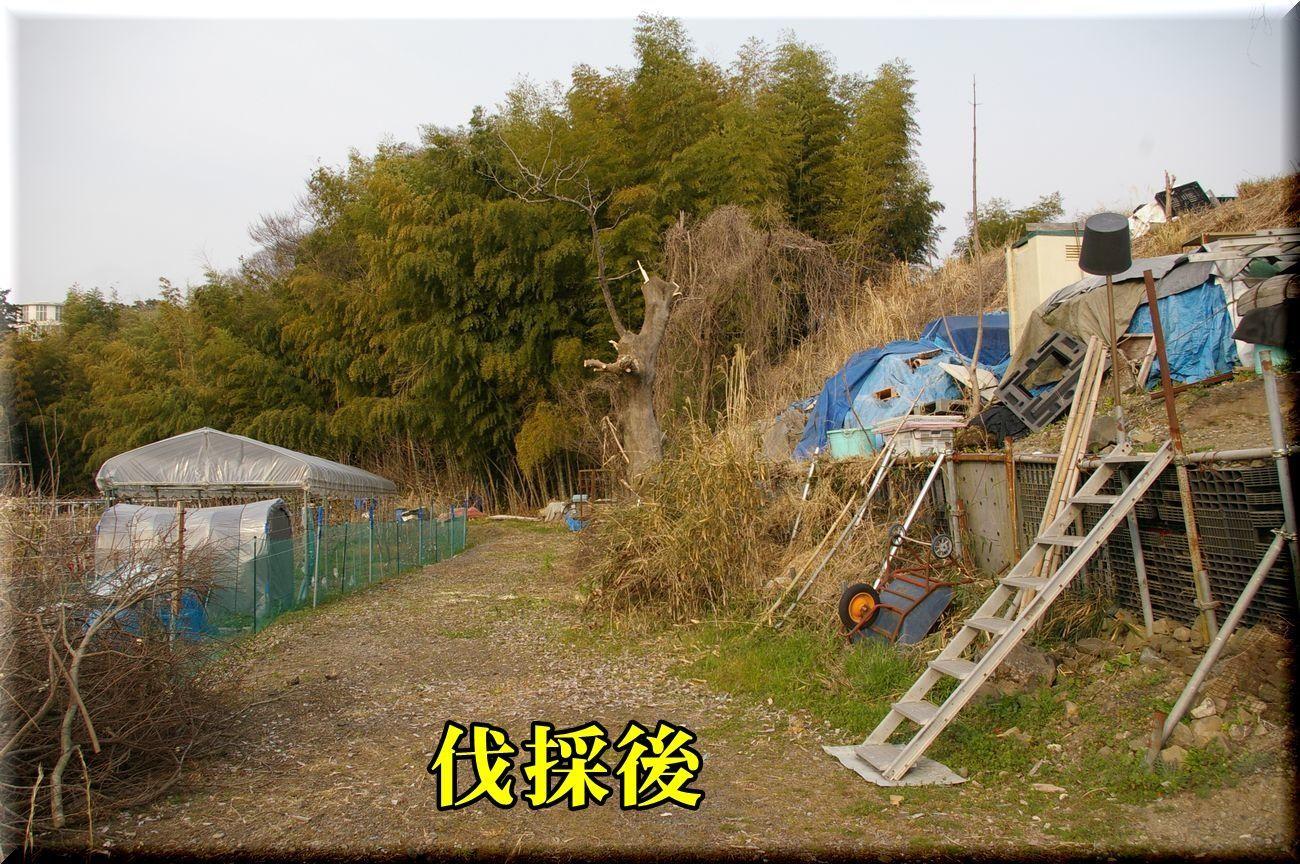1DC170320_001.jpg