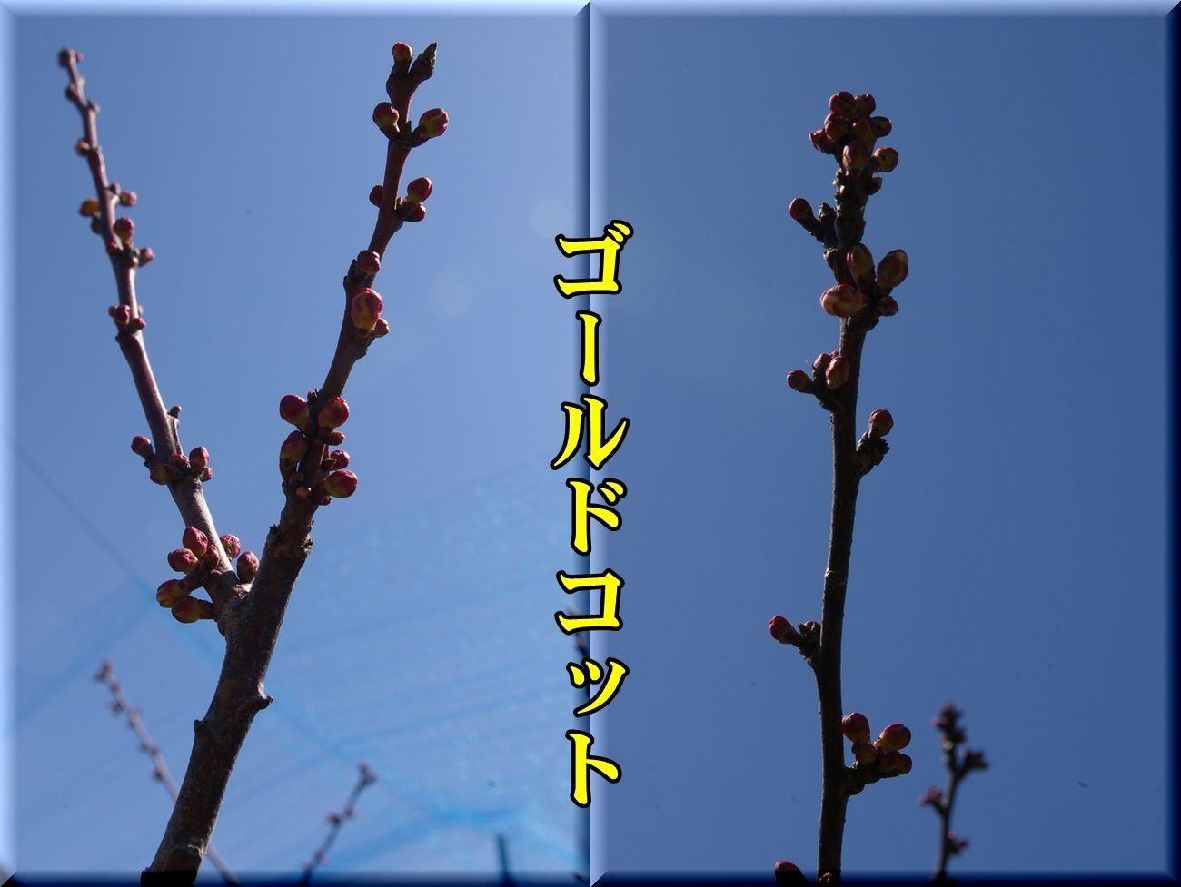 1Gcot170316_024.jpg