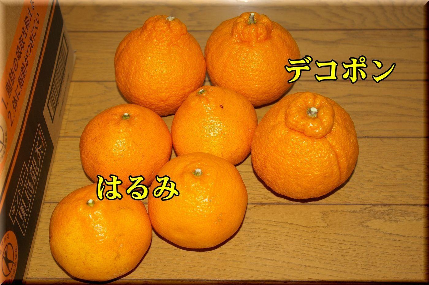 1deco_haru170227_003.jpg