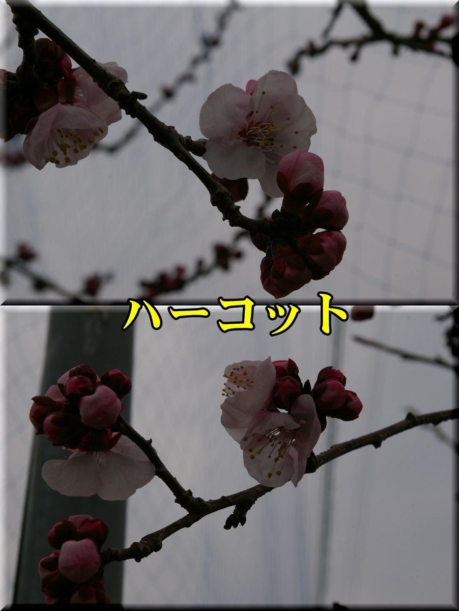 1harcot170331_011.jpg