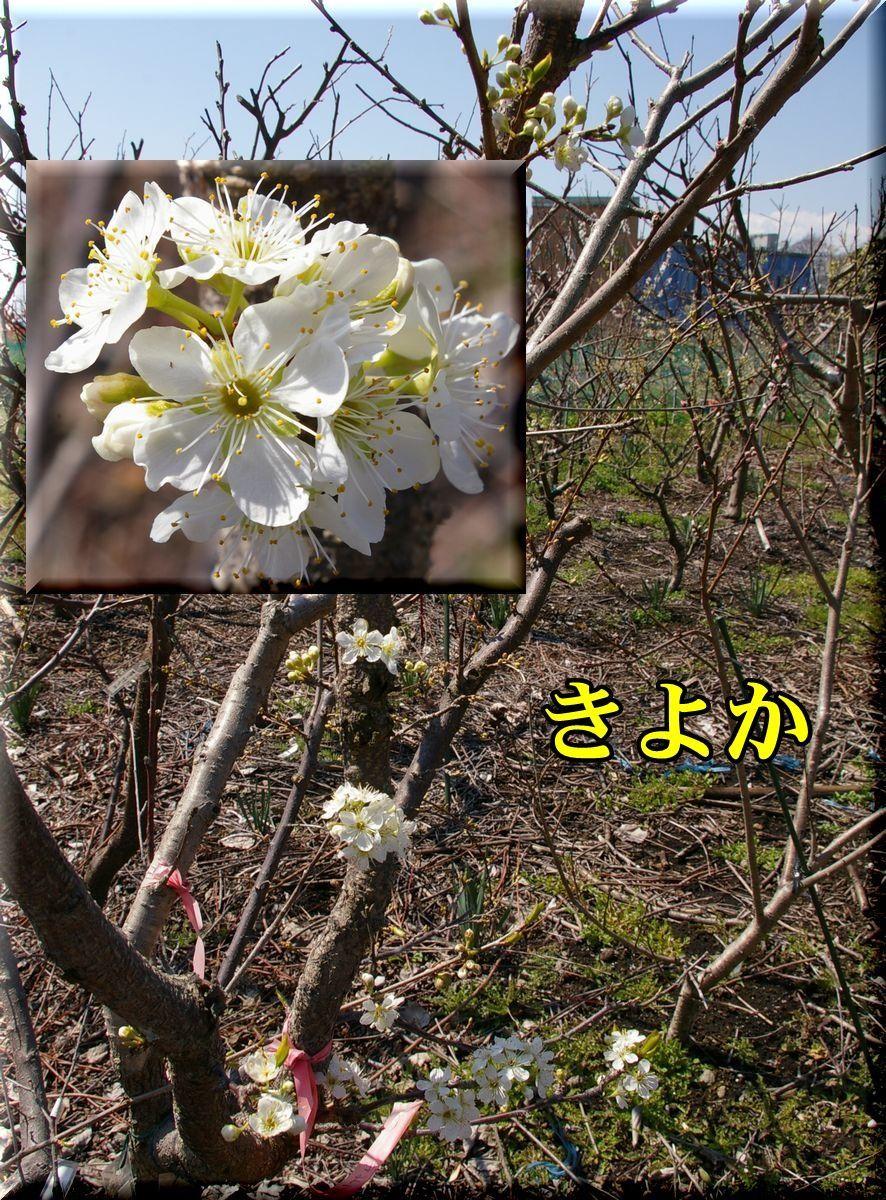 1kiyoka170322_006.jpg