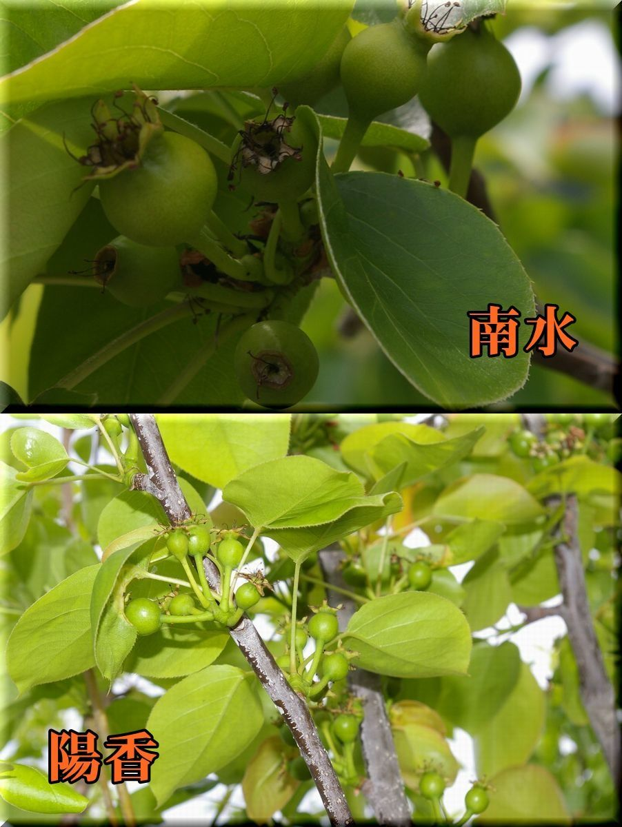 1nansu_youkou170503_039.jpg