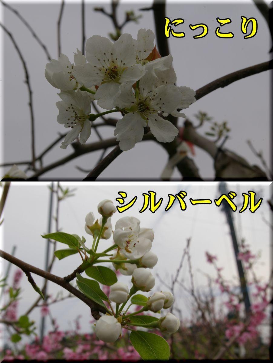 1nikk_silv170410_021.jpg