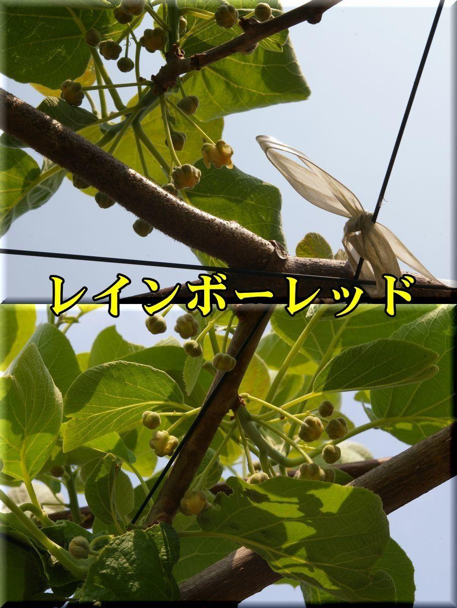 1rainbow170501_041.jpg