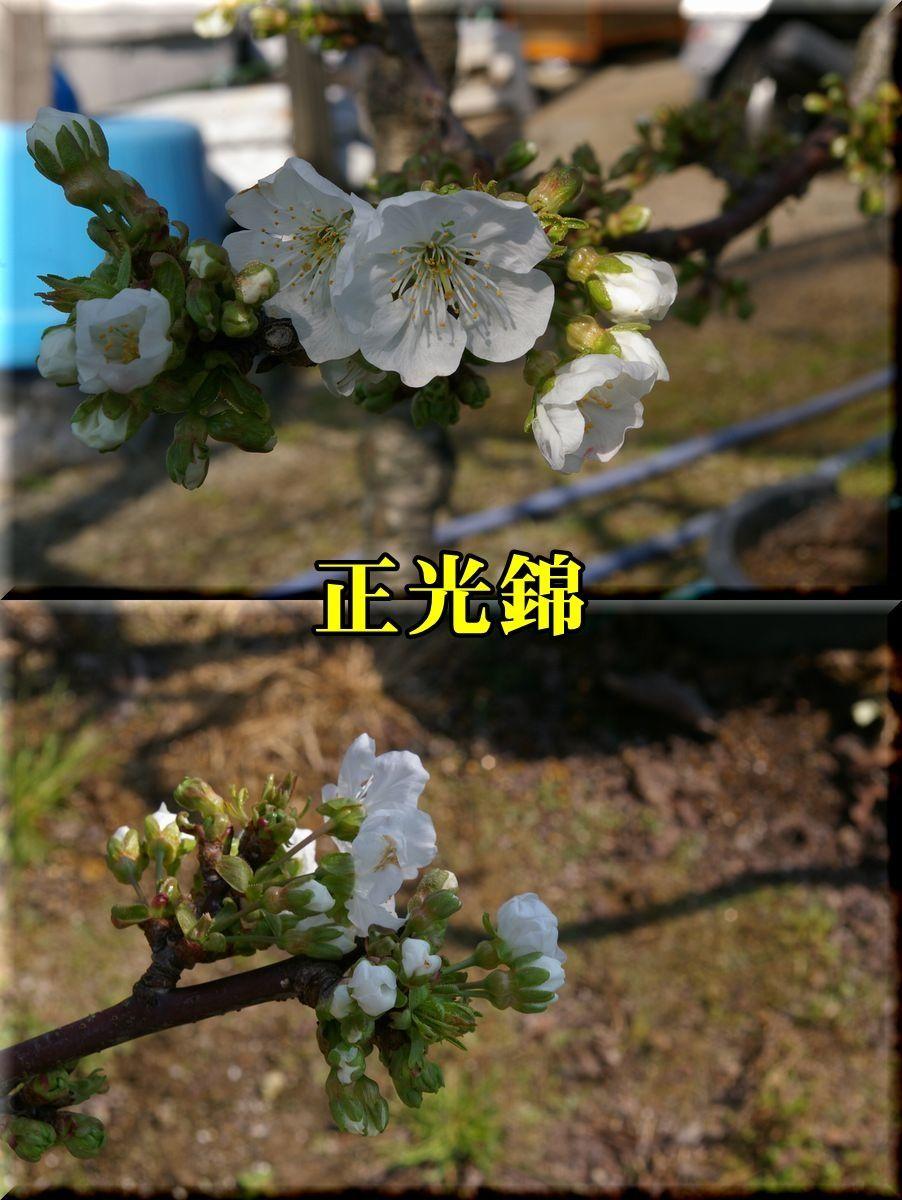 1seikounisiki170413_015.jpg