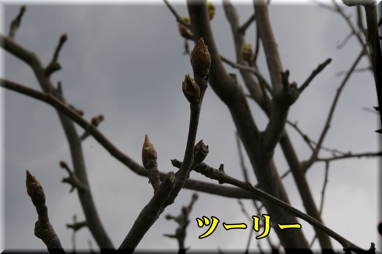1tury170323_026.jpg