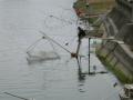 広川河口のシロウオ漁2