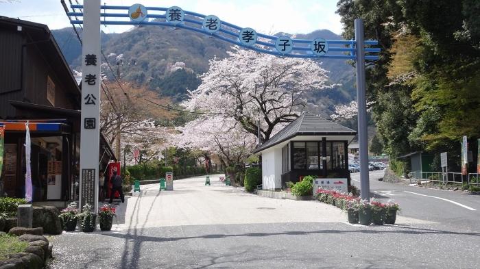 養老の滝と桜 (4)