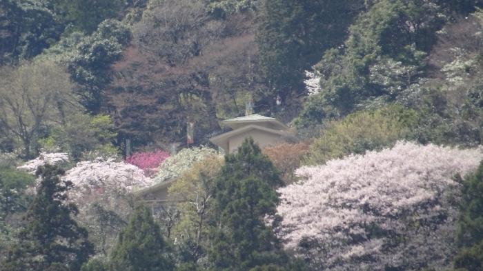 養老の滝と桜 (8)