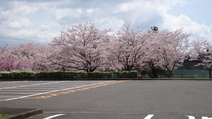 養老の滝と桜 (9)