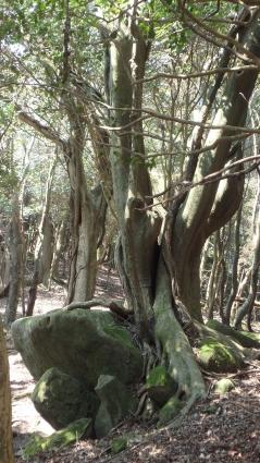 国東半島(両子山・中山仙境・熊野磨崖仏) 021