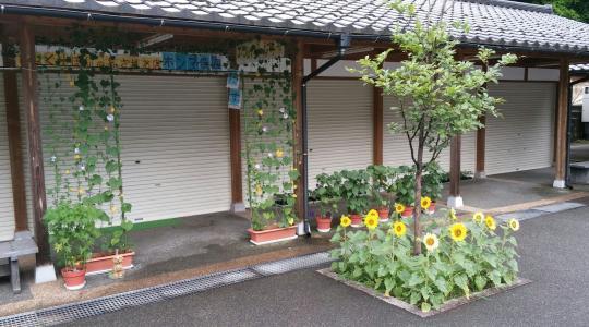 あつみ温泉神社のひまわり_convert_20170505183328