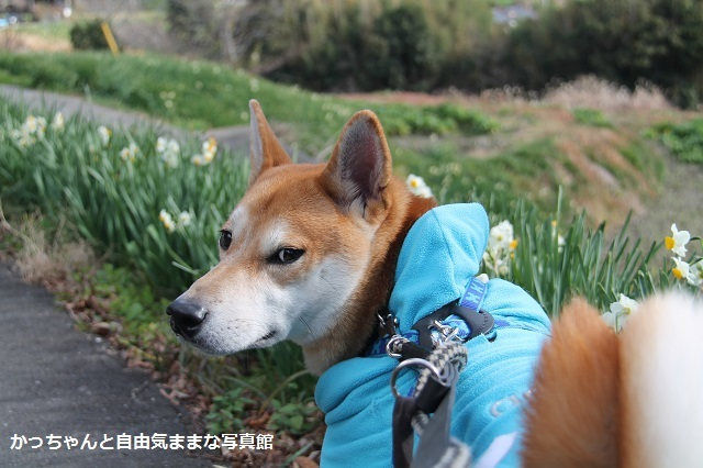 IMG_3425_suisen.jpg