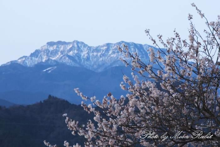 石鎚山と桜 愛媛県西条市上喜多川