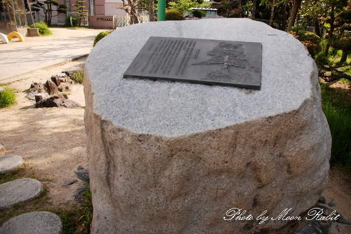 多賀小学校の大松跡 愛媛県西条市北条1504