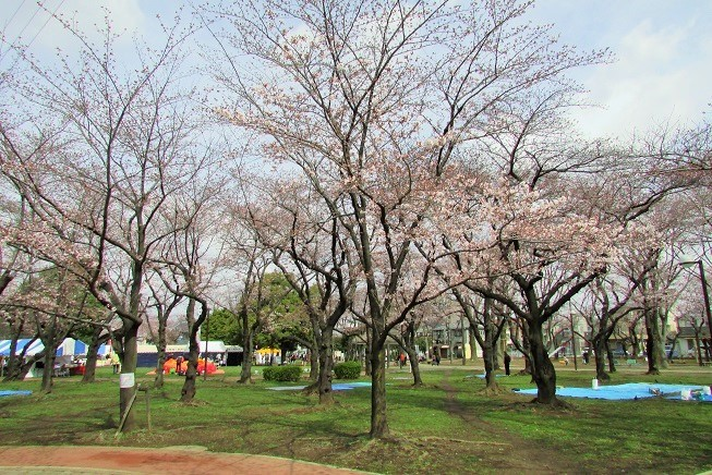 hatogaya170402-105.jpg