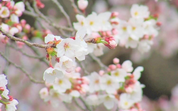 hatogaya170402-110.jpg