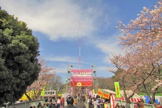 kawagutisakura170402-105.jpg