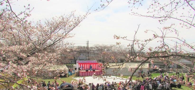 kawagutisakura170402-106.jpg