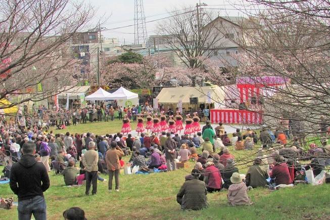 kawagutisakura170402-111.jpg