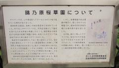 kinnohara170415-201.jpg