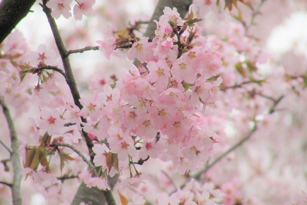 kitamoto-takao170409-106.jpg