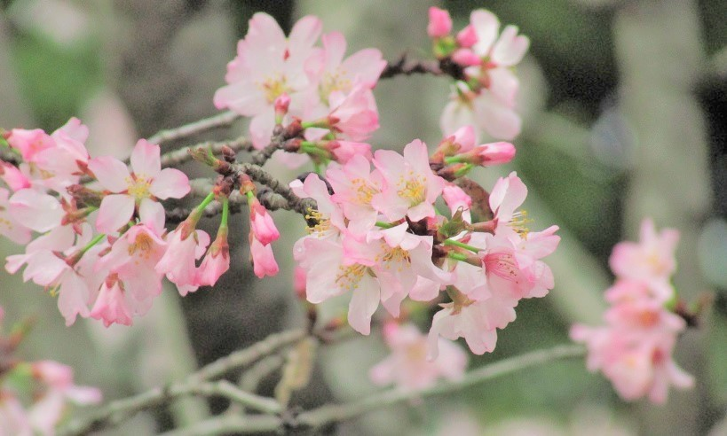 kitamoto-takao170409-112.jpg