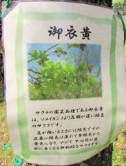 oomiyadaisan170416-201.jpg