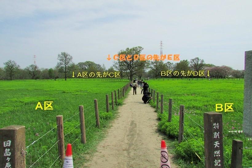 sakurasou170415-110.jpg