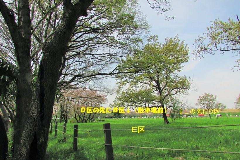 sakurasou170415-112.jpg