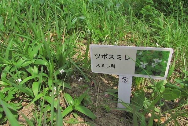 sakurasou170415-122.jpg