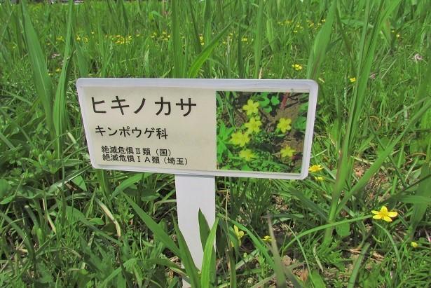 sakurasou170415-124.jpg
