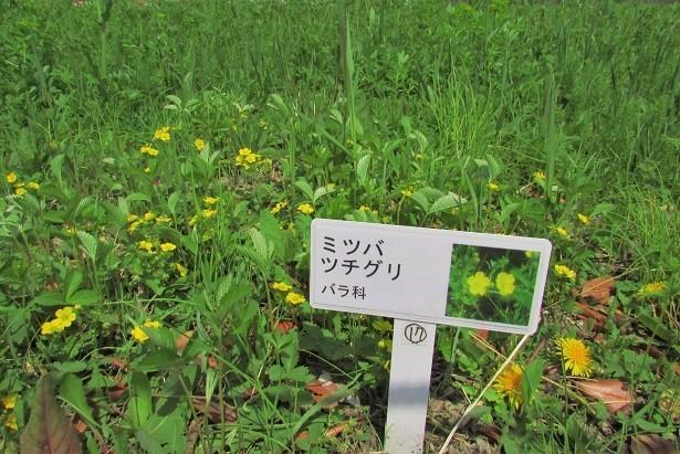 sakurasou170415-127.jpg