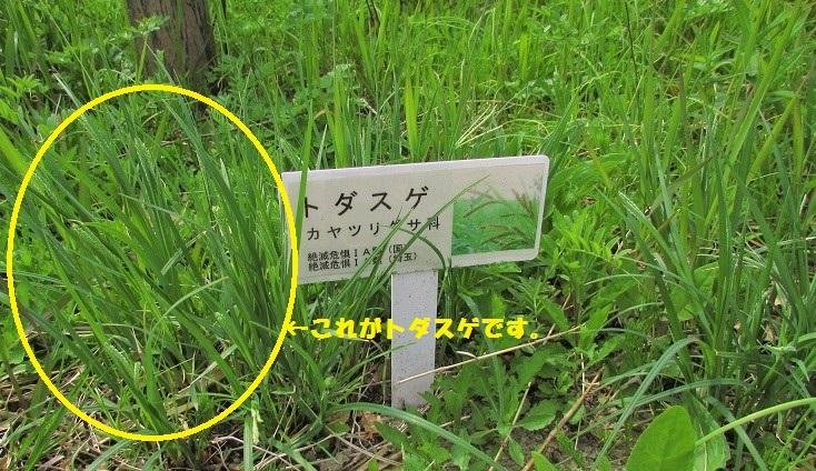 sakurasou170415-135.jpg