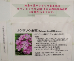 sakurasou170415-201.jpg