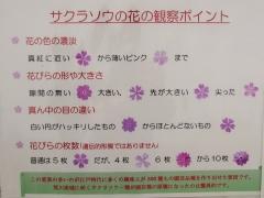 sakurasou170415-203.jpg