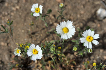 blog 12 395S near Olanch, Sage Flats Drive, Madia, CA_DSC2470-4.6.16.(2).jpg