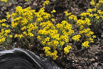blog 12 395S near Olanch, Sage Flats Drive, Goldfields, CA_DSC2505-4.6.16.(2).jpg