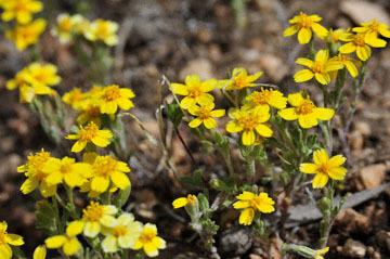 blog 12 395S near Olanch, Sage Flats Drive, Goldfields, CA 2_DSC2499-4.6.16.(2).jpg