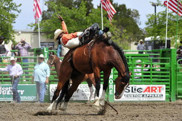 blog (6x4@300) Yoko 118 Livermore Rodeo, Bareback Bronco 4, Tre Hosley (74.5 Compton, CA) 2_DSC6971-6.11.16.(3).jpg