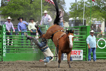 blog (6x4@300) Yoko 118 Livermore Rodeo, Bareback Bronco 6, Zack Brown (? Red Bluff, CA) 2_DSC7037-6.11.16.(3).jpg
