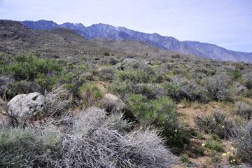 blog 12 395S near Olanch, Sage Flats Drive, CA_DSC2556-4.6.16.(2).jpg